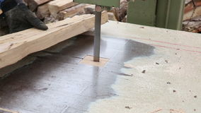 Worker cutting beech wood plank stock video