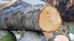 Worker cutting sawing wood with gas chain saw stock video