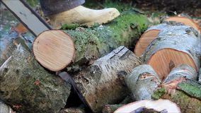 Worker cutting sawing wood with gas chain saw stock video footage