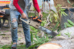 Worker cutting timber tree with chainsaw . Stock Photo