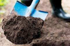 Worker digs the black soil with shovel  in the vegetable garden. Man loosens dirt in the farmland, agriculture and tough work concept Royalty Free Stock Photography