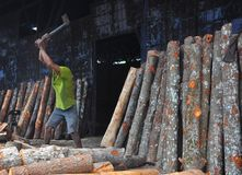 Worker doing his job. A worker cutting trees at charcoal factory Stock Photo