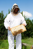 Worker examning tray with bees. Worker checking bees and honeycomb tray stock photography