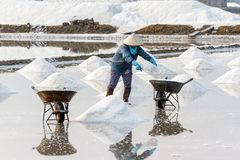 A worker fills wheelbarrows at the Hon Khoi salt fields in Nha T Royalty Free Stock Image