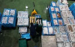 Worker on fish market. A worker weights and place in boxes different species of fish boxes inside a fish market in the Spanish island of Mallorca stock photos