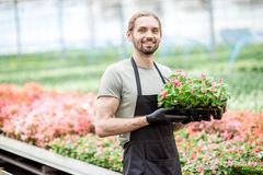 Worker with flower in the greenhouse. Portrait of a handsome worker of the plant farm holding flowers in the greenhouse Royalty Free Stock Photography