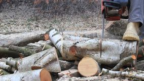 Worker with gas chain saw, sound, cutting, sawing wood for firewood stock footage