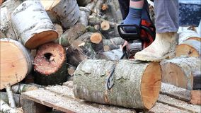 Worker with gas chain saw, sound, cutting, sawing wood for firewood stock video footage