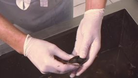 Restaurant Kitchen Gloves cook in gloves cleaning raw mussels in sink with waterknife
