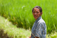 Worker in green rice field Stock Image