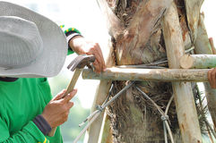 Worker hammering a nail on wooden stick making tree stake Stock Images