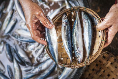 Worker hands holding a plate with fish Royalty Free Stock Photo