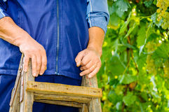 Worker hands wooden old ladder Royalty Free Stock Photography