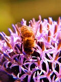Worker Having A Thistle Sip....... Royalty Free Stock Photo