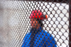 The worker in a helmet on production. Abstractly. Royalty Free Stock Photo