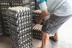 Worker life sort egg panel in wholesale market Royalty Free Stock Photos