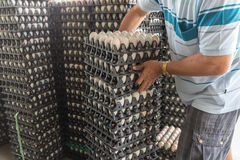 Worker life sort egg panel in wholesale market Royalty Free Stock Images