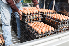 Worker life sort egg panel in wholesale market on truck Royalty Free Stock Image