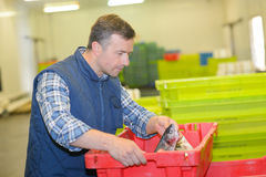 Worker lifting crate fresh fish Stock Images