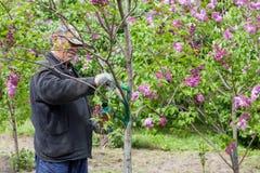 Worker in M.M. Gryshko National Botanical Garden (Kiev, Ukraine). Royalty Free Stock Photo