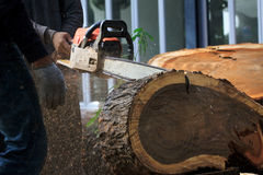 Worker man cutting bark  tree by chain saw Stock Photo