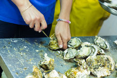 Worker opening oysters Royalty Free Stock Image