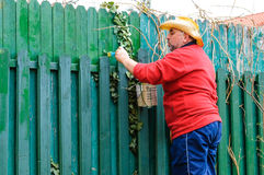 Worker painting fence Stock Photography