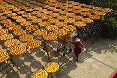 Worker in persimmon processing Stock Photo