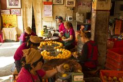 Worker in persimmon processing Royalty Free Stock Photography
