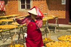 Worker in persimmon processing Stock Photography
