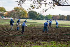 Worker planting flowers field seed Royalty Free Stock Photos