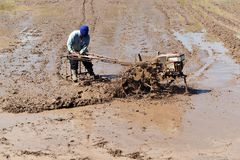 Worker plowing in rice field prepare plant rice Stock Image