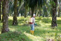 Weeds poisoning in oil palm plantations royalty free stock photography
