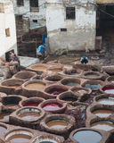 The worker prepare leather in Chouara Tannery in Fes Royalty Free Stock Image