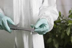 Worker In Protective Overalls Holding Calipers In Greenhouse Stock Images