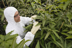 Worker In Protective Overalls Measuring Plants. Male worker in protective overalls measuring plants in greenhouse Royalty Free Stock Photo