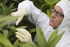 Worker In Protective Suit Measuring Plants. Male worker in protective suit measuring plants in greenhouse Stock Image