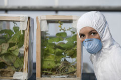 Worker In Protective Wear By Plant Samples In Glass Box Stock Image