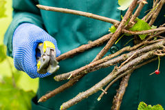 Worker is pruning bush branches Stock Photo