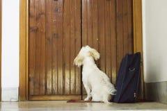 Worker puppy Stock Photo