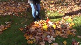 Worker rake leaves pile stock footage