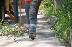 A worker raking up cut branches and leaves on a sidewalk on a sunny day Royalty Free Stock Photos