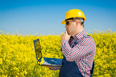 Worker in a rapeseed field doing inspection for biodiesel production Stock Photography