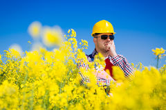 Worker in a rapeseed field doing inspection for biodiesel production Stock Photo