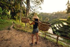 Worker on rice field carrying around. Agricultural details on rice terraces Stock Photography