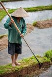 Worker in rice paddy Royalty Free Stock Photography