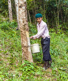 Worker in a rubber tree plantation in Thailand Stock Photography