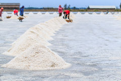 Worker at salt field Royalty Free Stock Image