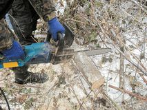 The worker saws a tree by chainsaw. Male hands keep the chainsaw in overalls and saw a tree in the winter royalty free stock photography