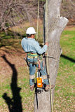 Worker Securing a Safety Rope. A worker is in the process of clipping on a second safety rope before cutting the next section of tree trunk, which is secured to stock photos